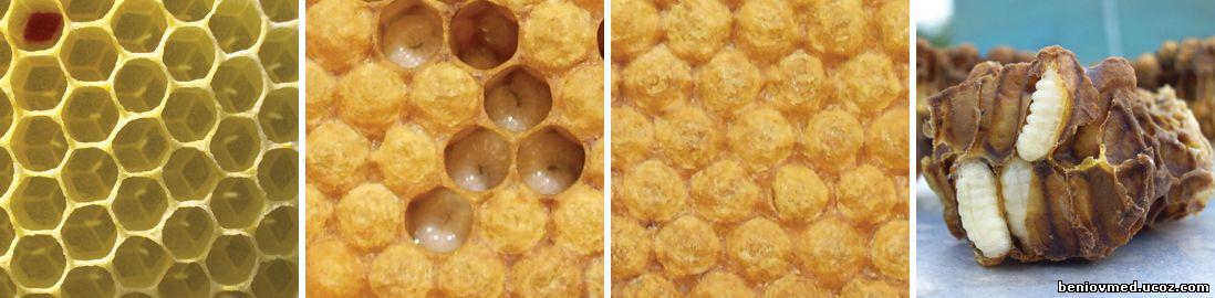 етапи в развитието на пчелите