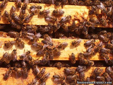 преглед на пчелно семейство