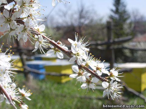 пчелин през пролетта