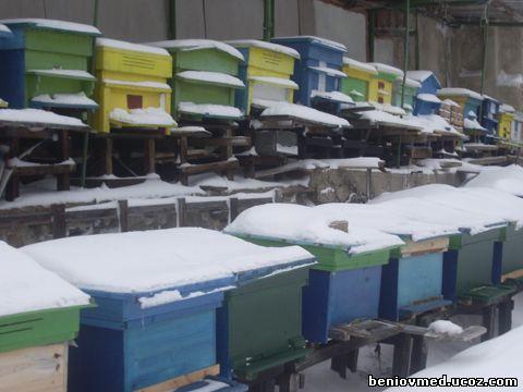 пчелин през зимата