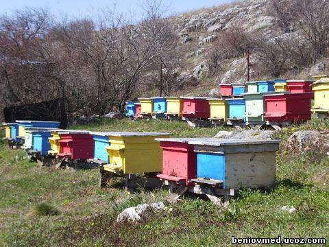 пчелни семейства МК