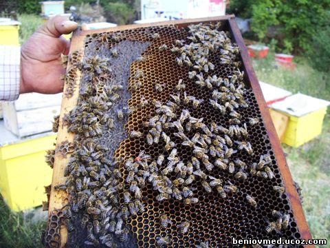 откриване на пчелна майка