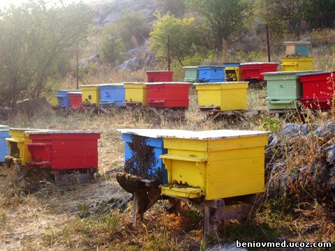 пчелни семейтва