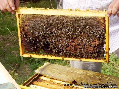 пчелна рамка с пчели