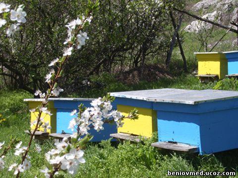 подхранване на пчели