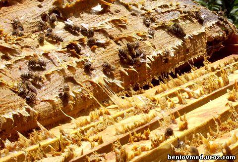 пчелен клей (прополис)