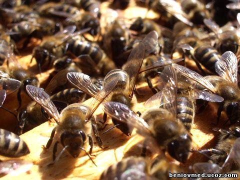 пчелно семейство