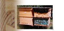 пчелен кошер със сглобка лястовича опашка