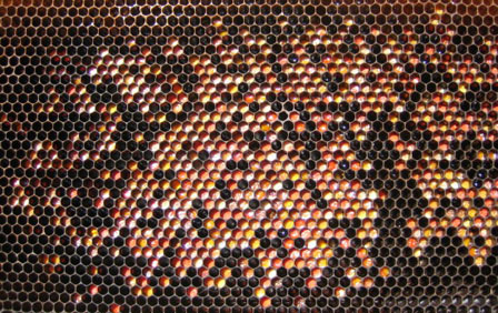 полен, пчелен прашец, цветен прашец