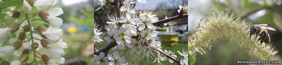 пролетна пчелна паша