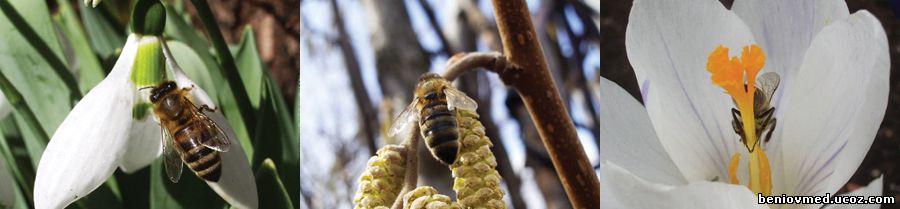 пчелна паша