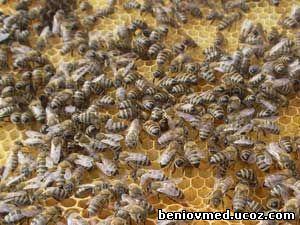 пчели търтовки