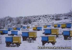 работа на пчелина през зимата